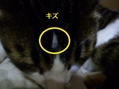 14xb4.jpg