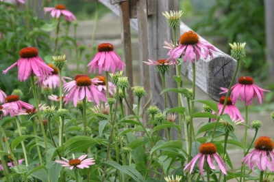 pink_flowers01.jpg