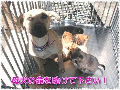 母犬の命を助けて下さい