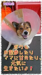 北海道のワンちゃん!