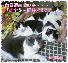 白黒猫の呪い、オナシ一族