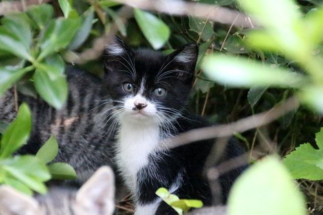防砂林の仔猫を救え