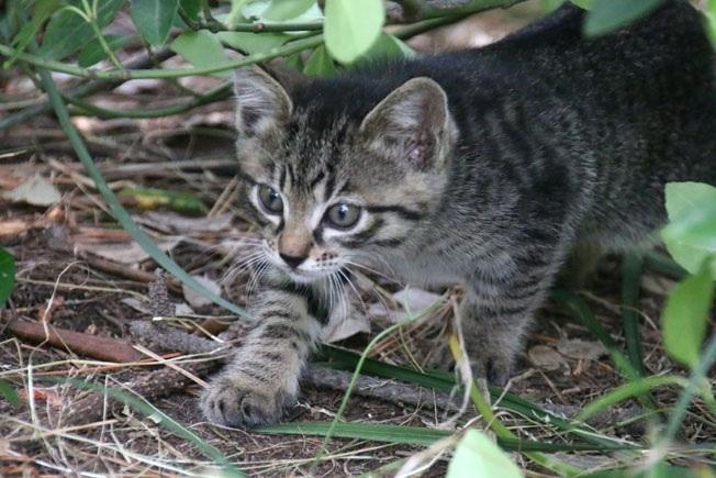 防砂林の仔猫たち