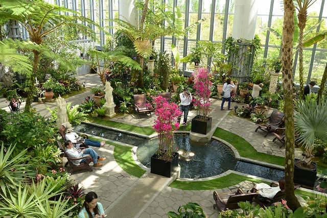 奇跡の星の植物館4
