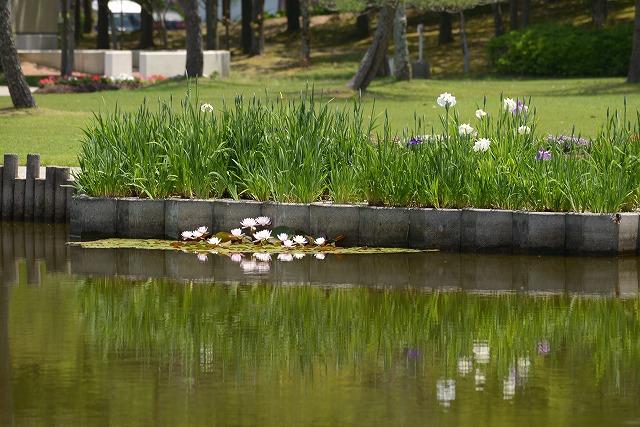 あやめ池公園4