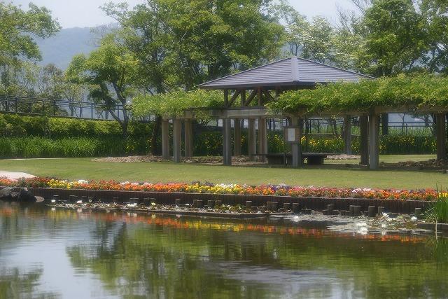 あやめ池公園6
