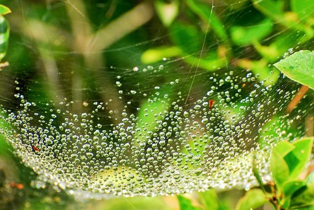 蜘蛛の巣のゆりかご1
