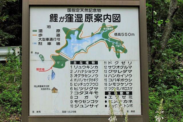 鯉が窪湿原2