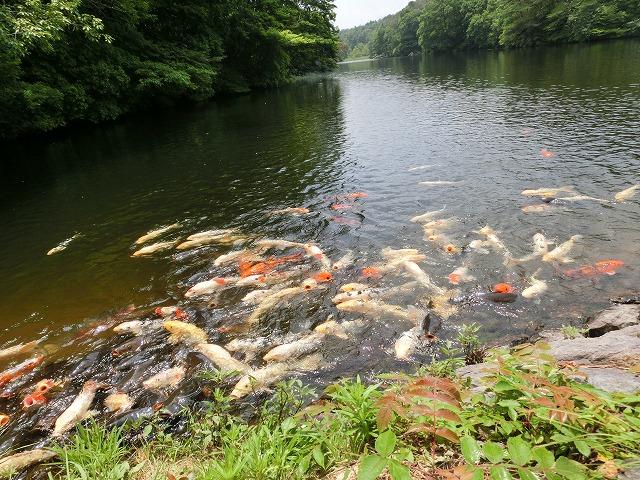 鯉が窪湿原5