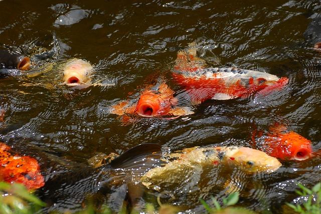 鯉が窪湿原6