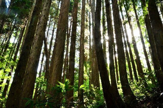 木々の隙間からこぼれる陽射し