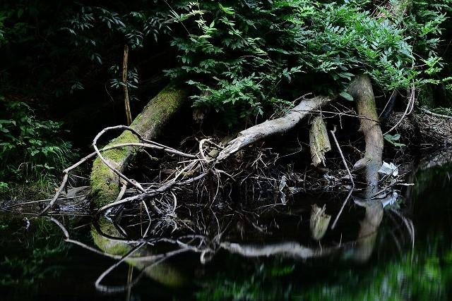 川面に映る流木