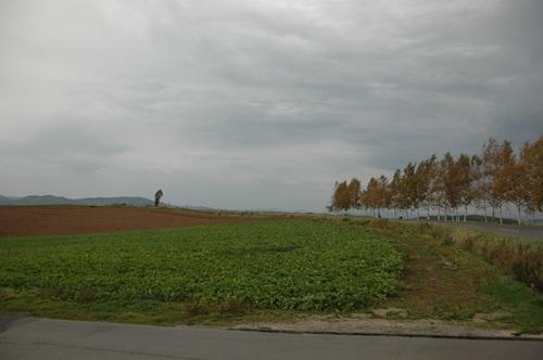 20081009002.jpg