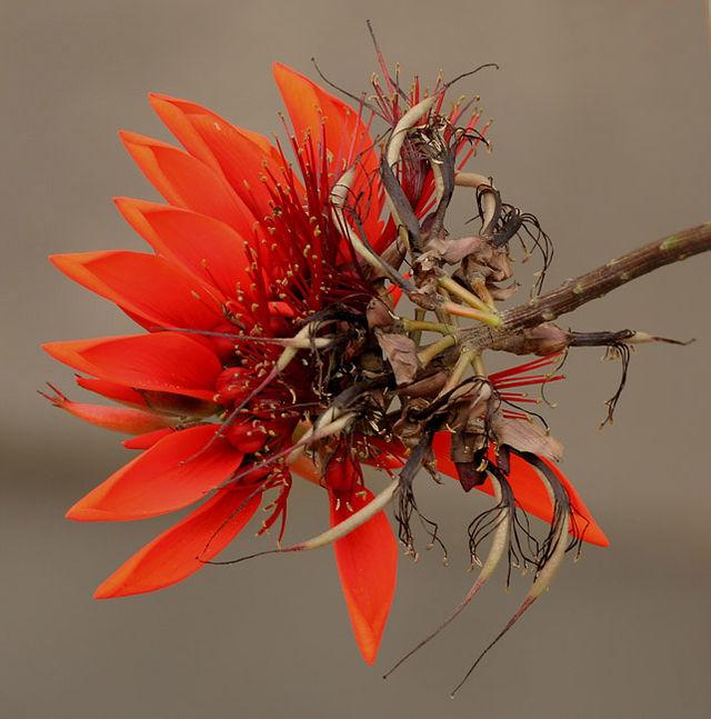 640px-Flower_I_IMG_3974.jpg