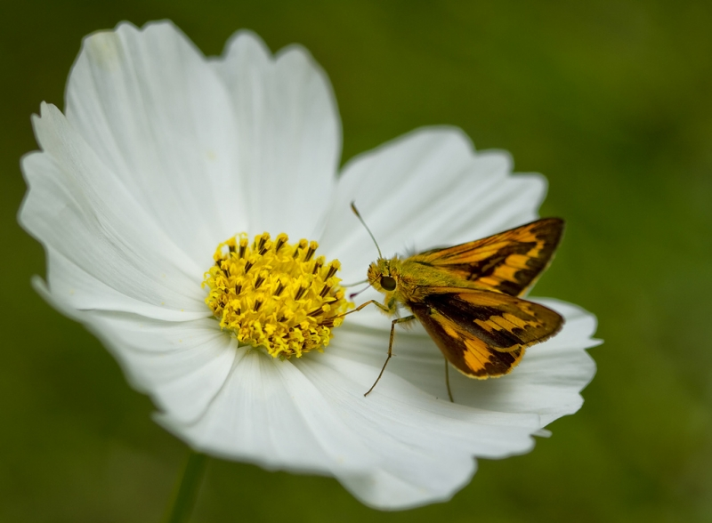 skipper-on-cosmos.jpg