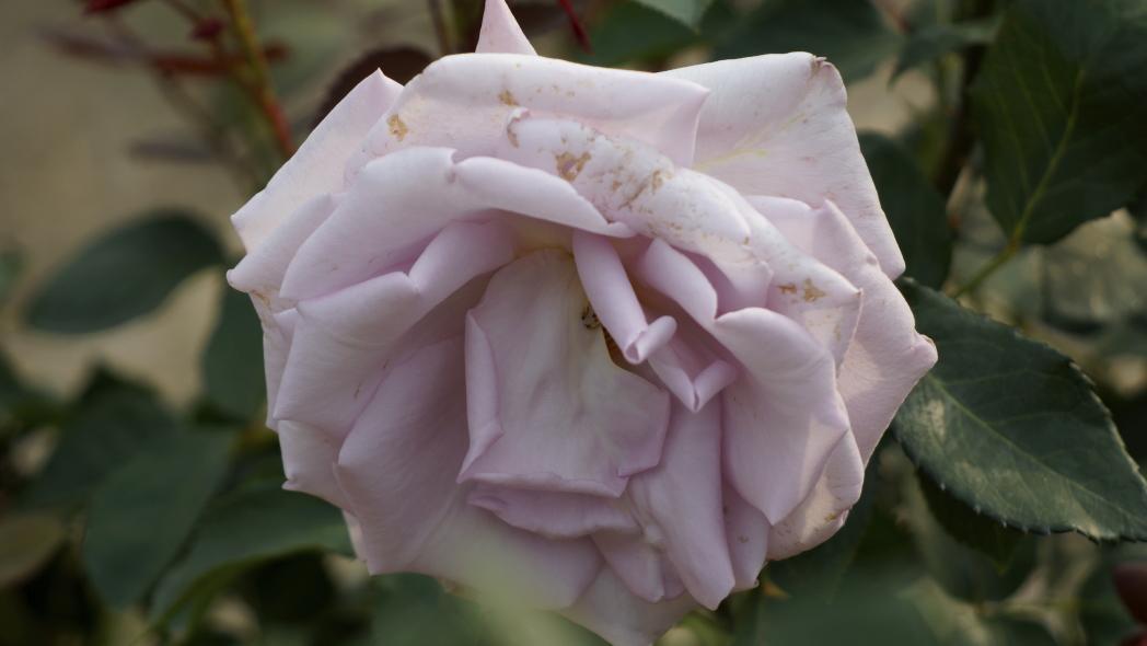 紫香 1 智光山 20140523