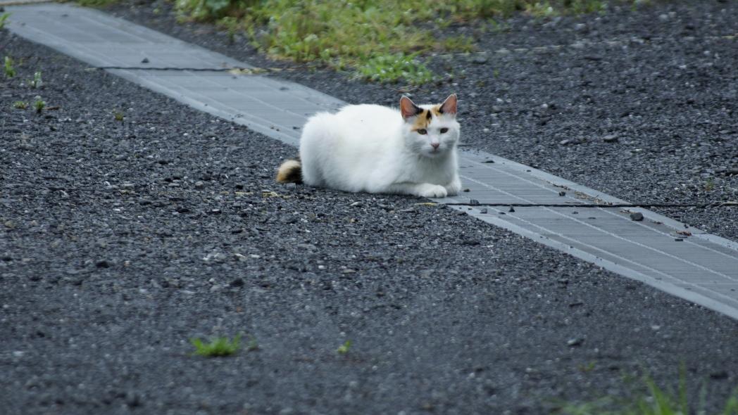 まったり~な午後に20140612-猫i