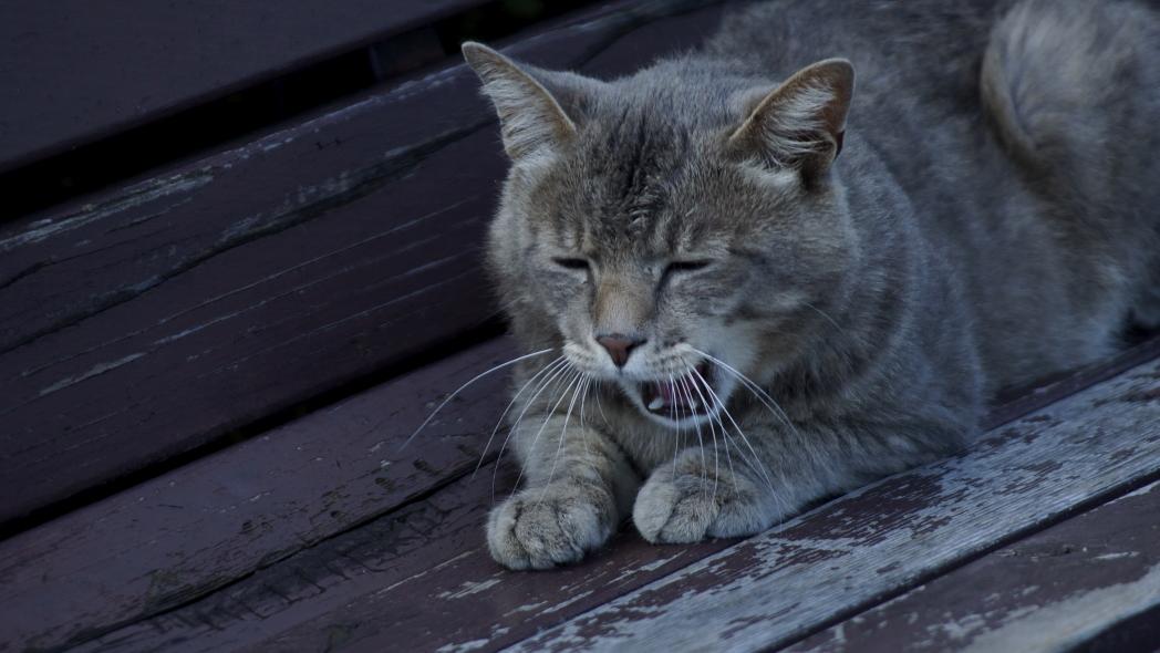 まったり~な午後に20140612-猫f