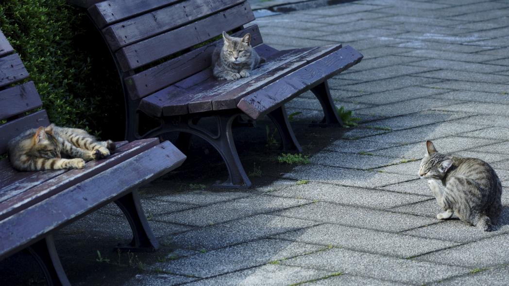 まったり~な午後に20140612-猫三匹