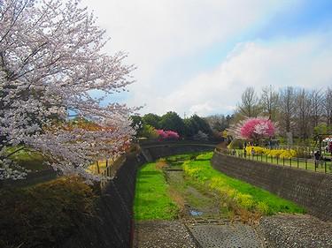 20140405昭和記念公園 (2)