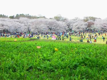 20140405昭和記念公園 (6)