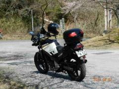 庭田山の桜 010