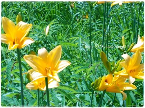 F20140524湿性花園02