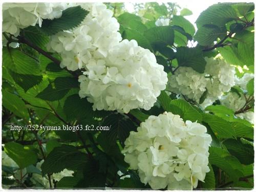 F20140524湿性花園04