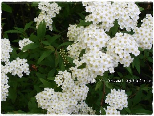 F20140524湿性花園05
