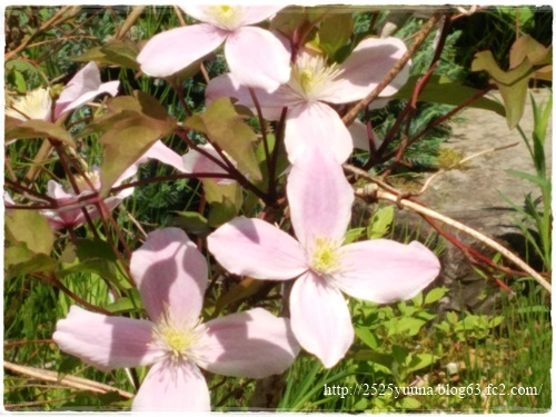 F20140524湿性花園06