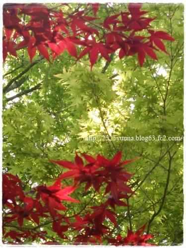 F20140524湿性花園07