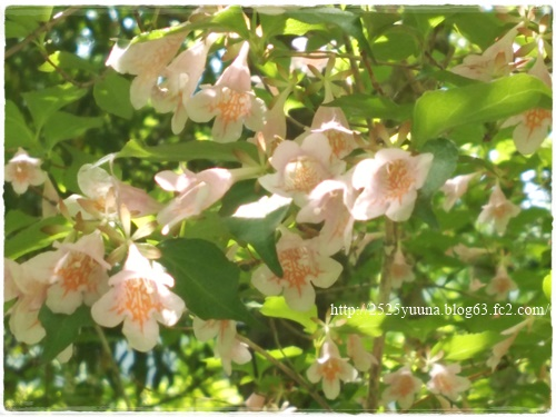 F20140524湿性花園08