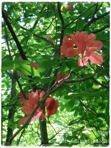 F20140524湿性花園09