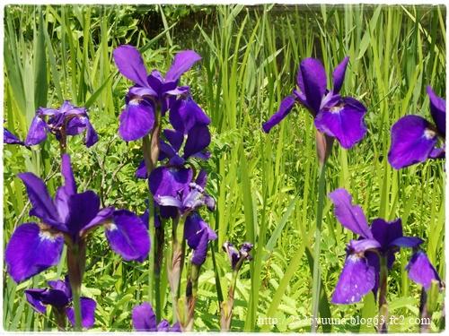 F20140524湿性花園10