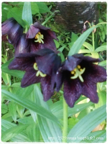 F20140524湿性花園11