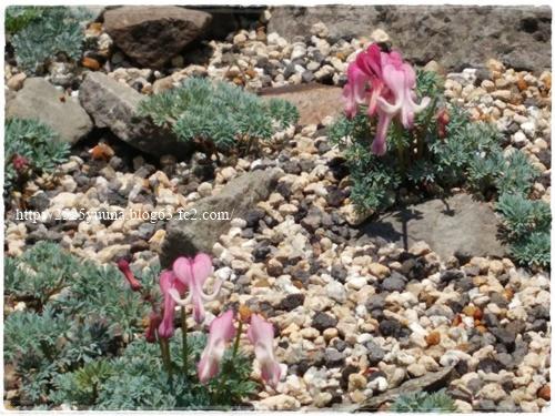 F20140524湿性花園15