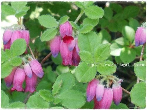 F20140524湿性花園16