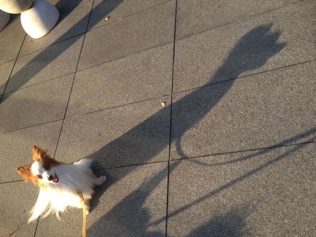 朝散歩夕散歩