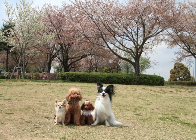 4月の犬@写真部 2014