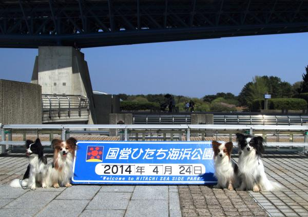 ひたち海浜公園 4/24/2014