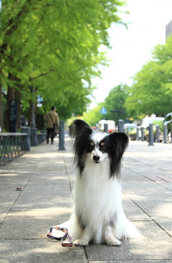 5月の犬@写真部