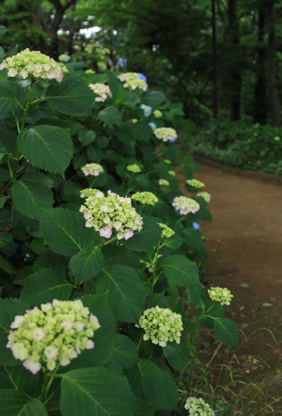 6月 犬@写真部「お花」