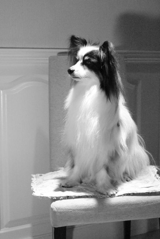 3月 犬@写真部 モノクロ