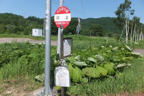 kawakami3.jpg