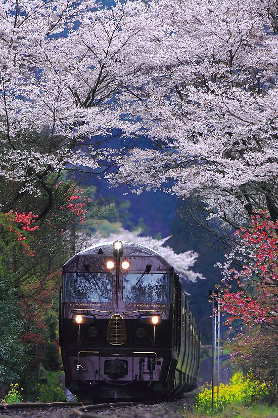 豊後中川の桜