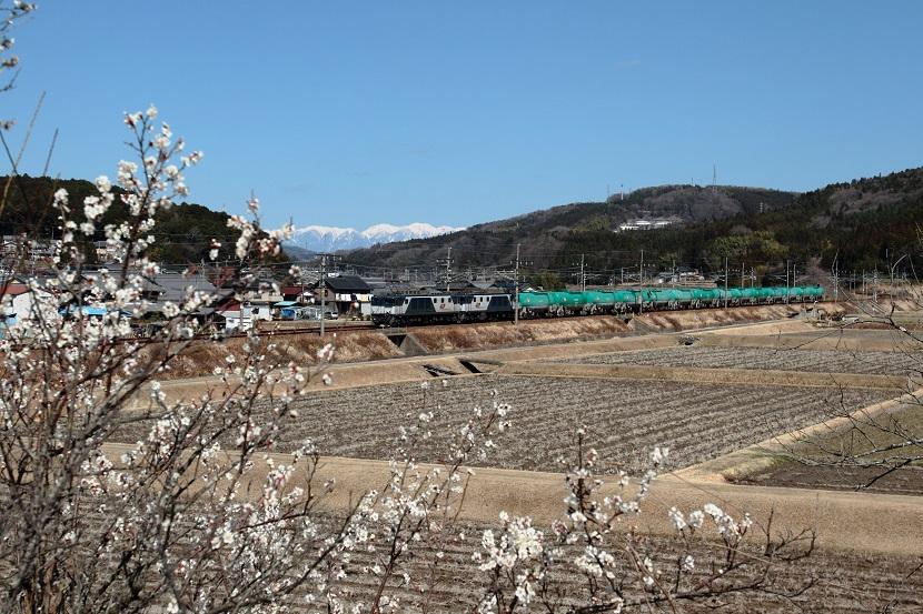 梅は咲いたか桜は・・・ホ~ホケキョ!
