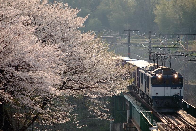 花が散る姿まで美しい・・・と感じられる桜ってやっぱ凄いよね
