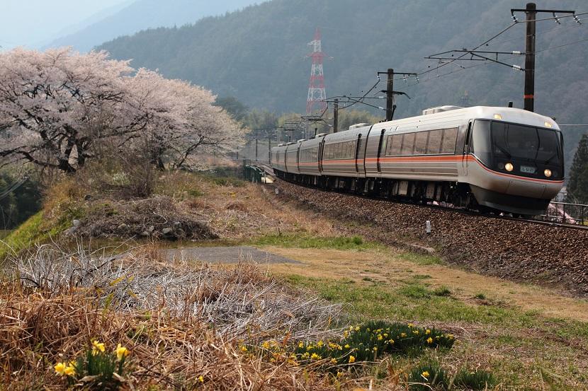 風のようにやってくる そして桜の花びらが湧き立つ
