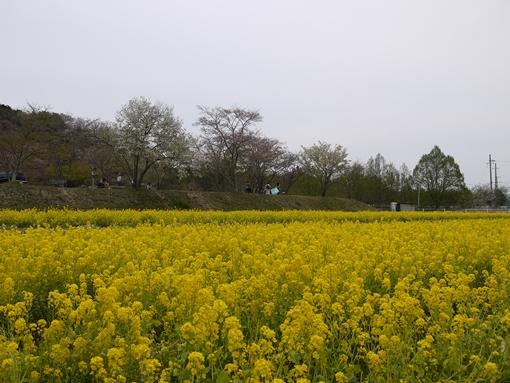 P1120014.jpg