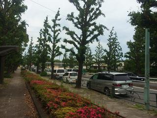 薄曇の駒沢公園付近1 by占いとか魔術とか所蔵画像